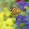 今日の景色 09/03 蝶