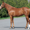 2021-2022 POG 牝馬第7位