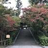 鎌倉の紅葉情報2019  今日の円覚寺  11月25日