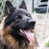 犬にだって「歯」は大事。やってますか?