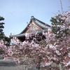 【お寺まるごと美術館PROJECT】妙蓮寺で長谷川派の障壁画を見てきた