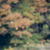 🦜野鳥の回【7】モズ(百舌)