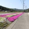 富山県氷見市の県道18号沿いで5月ごろに見かけた花を振り返る