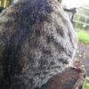謎のごま団子と牧場の子猫