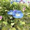初盆~お花に囲まれて~