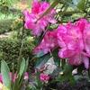 桜は散っても恵みの雨♪