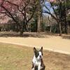 葉桜まじり
