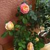 開花ラッシュ…6 花の見た目の雰囲気が素敵