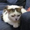 猫におけるCIAOちゅ~るの求心力が凄い