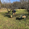 果実樹堆肥