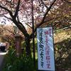 【伊豆旅行】カピバラと触れ合い、桜を見てきた🌸