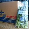 新規就農者必見!JAを通して野菜を出荷するってこんな感じだよ!
