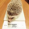 留守番と体重測定