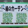 緑のカーテン①今年はアサガオです。