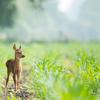奈良公園の鹿はなぜ鹿せんべい屋を襲わないのか?
