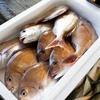 2018年7月11日 小浜漁港 お魚情報