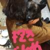 甲斐犬サンの一代一主!の巻〜ネェネノ為ニ働クゾイッ٩( ᐛ )و