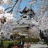 桜の季節の国宝犬山城