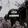 木造のアーチと桜を求めて…日本三名橋の一つ、山口県岩国市の錦帯橋に行ってみた!