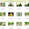 Python と OpenCV で 類似画像検索