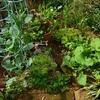 食べる庭づくり