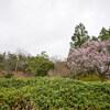 早春の植物園 Ⅰ