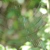 ジョロウグモの網がきれいな季節です クモの巣ダーツの思い出