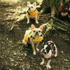 愛犬とのキャンプって選択肢がありますよ!
