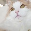 ノル猫ラテちゃんの気ままBLOG