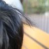 【毛髪の個人差】年齢・個人による毛髪の違い