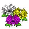 菊の花(重陽の節句)