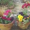 冬の寄せ植えと、吉谷桂子さんの著書。