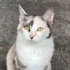 草木ドライブインのネコさんに会いに行きました。