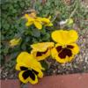 春と歌「早春賦」