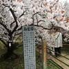 今週前半は京都で過ごしました。
