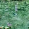 モネの池(岐阜県関)