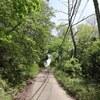 神戸)再度公園、学習の森。センダイムシクイ、シジュウカラ、ヤマガラ、エナガ、ホオジロ、カワラヒワ。