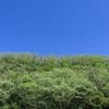 新緑の名所は紅葉の名所~京都・鴨川上流より~