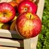 《こっくり飴色》りんごがたっぷりの「タルトタタン」レシピ《黒糖使用》
