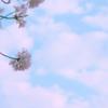 4月12日牡羊座新月です