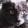 デカい黒猫2