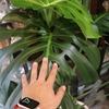 観葉植物の季節です! どんどん入荷しています♪