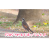 FZ85で野鳥写真&動画を撮ってみた!カメラ初心者にオススメ