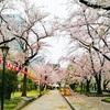 錦糸町駅から徒歩1分で花見スポットと駄菓子屋に行けるのが最強の環境だと気づいた