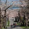 2021桜めぐり 津軽海峡を望む桜トンネル 住三吉神社。
