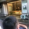 上野動物園🐼年パス買ってのんびりのススメ