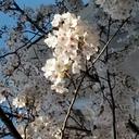 秋に咲く桜のNURSEのお仕事そして投資