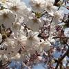 【募集】4月20日(土)千葉開催、思春期ブルー相談室 おしゃべり会、申込み受付中です!