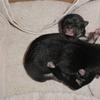 子犬のお宝画像放出 Part12 ~箱の中からこんにちは~
