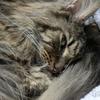 優しい老猫フサボン 痙攣を起こす! 呼吸をしてるのか常に心配で辛い